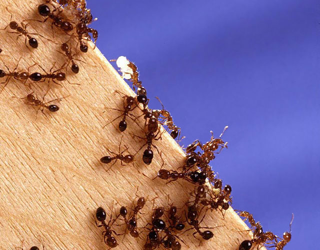 Question How Do You Get Rid Of Ants On The Kitchen Counter Kitchen